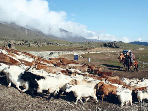 Cuộc sống trên thảo nguyên với nghề chăn nuôi gia súc vẫn luôn được duy trì từ xưa đến nay