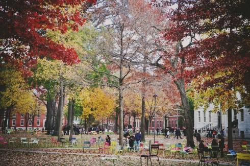 Lá xanh, lá vàng, lá đỏ và lá rụng trong sân trường Đại học Havard ở Cambridge - Massachusett.