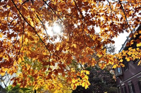 Nếu đến vùng New England vào mùa thu, bạn sẽ dễ dàng bắt gặp hàng trăm chiếc máy ảnh chĩa... lên trời để chụp những tấm hình như thế này.