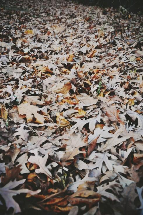 Không chỉ có lá trên cây mới đẹp. Những thảm lá khô dày êm ái vào cuối thu cũng thơ mộng không kém.