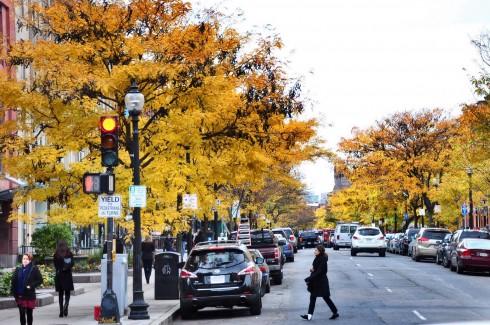 Đường phố Boston trở nên thơ mộng hơn với màu lá vàng rực.