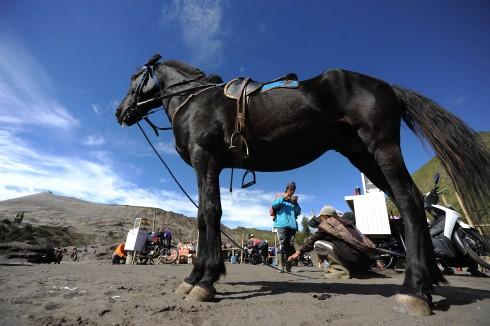 Ngoài việc canh tác nông nghiệp, người làng Tengger dưới chân núi Bromo đem ngựa phục vụ du khách.