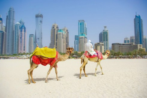16930_Dubai_Camel_on_the_town_scape_background