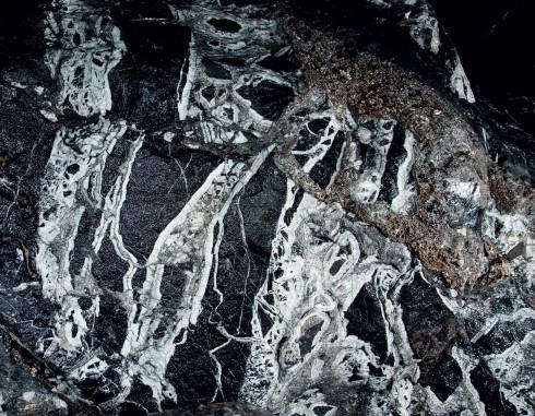 Mảng hóa thạch của các sinh vật biển lưu lại trên vách đá. Gần cửa ra Sơn Đoòng cũng có một bộ xương động vật hóa thạch còn nguyên vẹn