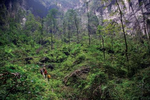 Rừng nguyên sinh trong lòng hang Sơn Đoòng