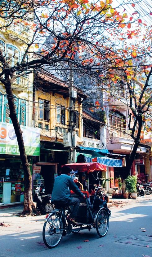 Một góc phố xưa cũ với hình ảnh cây bàng đang mùa thay lá và chiếc xích lô – phương tiện di chuyển quen thuộc của người Hà Nội những ngày đã qua