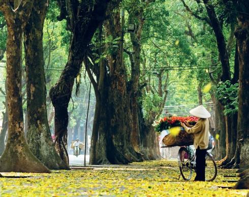 Xe hoa rực rỡ khoe sắc trên đường Phan Đình Phùng trong một buổi chiều Thu