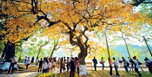 Bên bờ hồ Hoàn Kiếm, cây lộc vừng bừng sáng đón Thu về