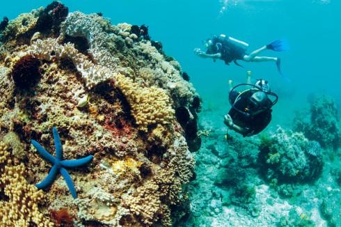 Rạn san hô tuyệt đẹp chỉ có thể thấy ở Bahoi