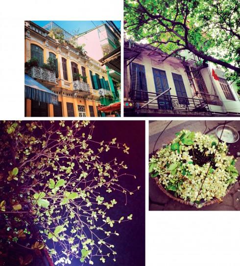 Ở Hà Nội, mỗi tháng đều gắn với một loại hoa riêng, và mỗi góc phố phường lại xanh màu riêng của một loài cây lá.