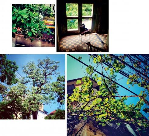 Mỗi cây xanh mang một dáng vẻ riêng, khi thì yêu kiều, lãng mạn, lúc lại mạnh mẽ, khỏe khoắn.