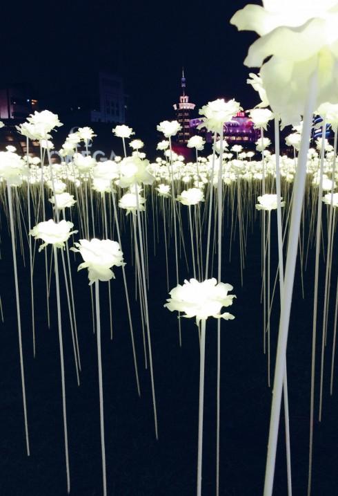 Vườn hoa hồng tỏa sáng tại khu triển lãm DDP.