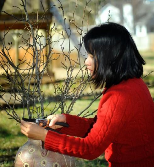 Chị Doãn Thanh Hương rất thích cùng gia đình chuẩn bị những cành hoa, chậu cây thật đẹp cho năm mới