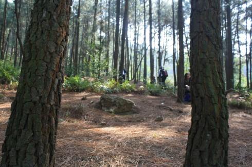 Lang thang trong rừng thông