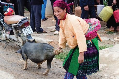 Một chú lợn được đem ra bán tại phiên chợ