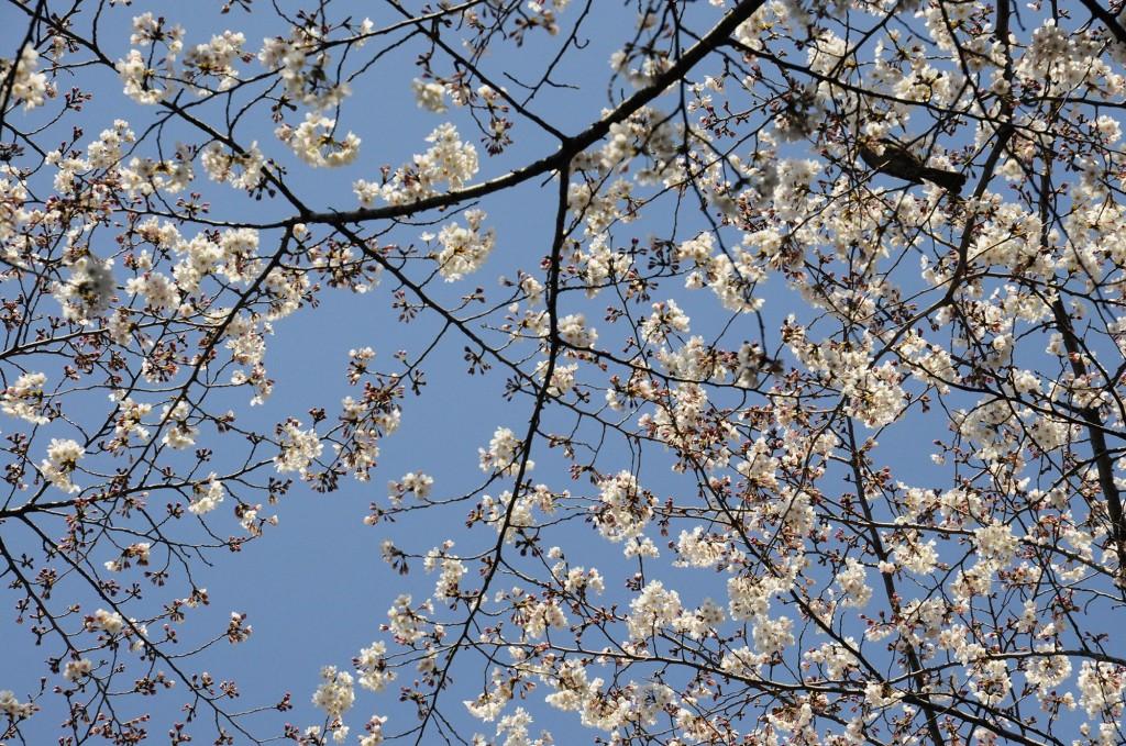 Thời gian ở vườn Nhật như được dừng lại hoặc trôi một cách chậm rãi đến không ngờ.