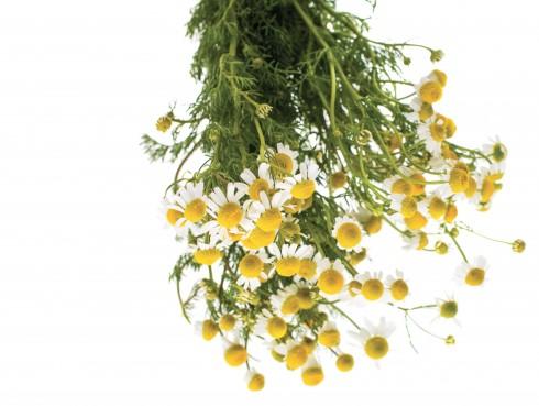 bi quyet lam dep tu hoa cuc dai