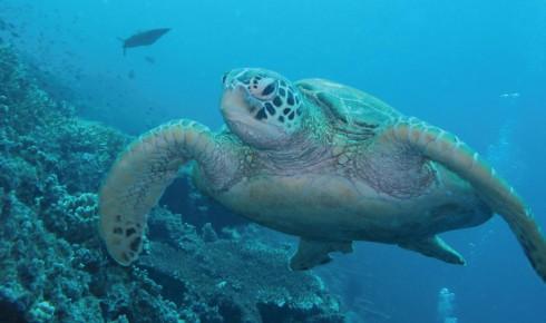 Người dân Malaysia có ý thức cao về bảo tồn động vật biển, ở đây có nhiều loài rùa quý.