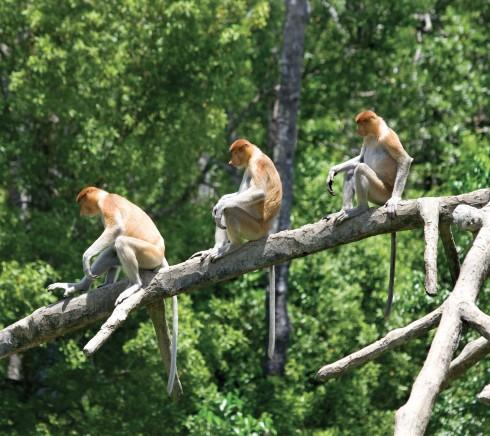 Từ KK, bạn có thể dễ dàng chọn các tour khám phá môi trường tự nhiên ở khu vực Borneo.