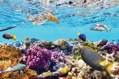Những chú cá bảy màu quanh rạn san hô.