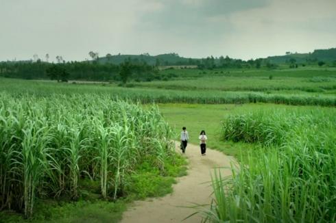Hoa Vàng, đúng như chờ đợi và hi vọng, lấp đầy cả cảm quan nghệ thuật lẫn trái tim bằng cả các khung hình thuộc dạng đẹp nhất của phim Việt