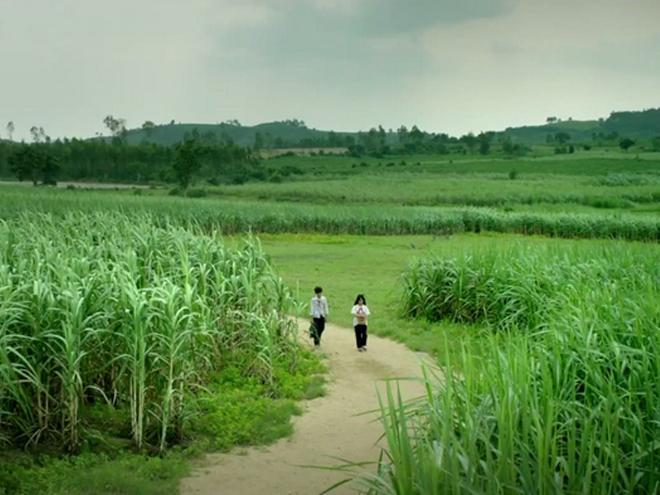 Phim điện ảnh Việt Nam: Tôi Thấy Hoa Vàng Trên Cỏ Xanh
