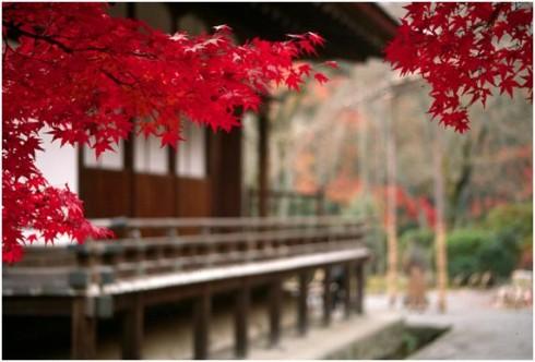 Xin visa du lịch tự túc tại Nhật
