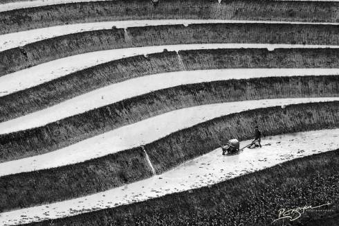 Rice Farmer Tilling (Ruộng lúc bậc thang)