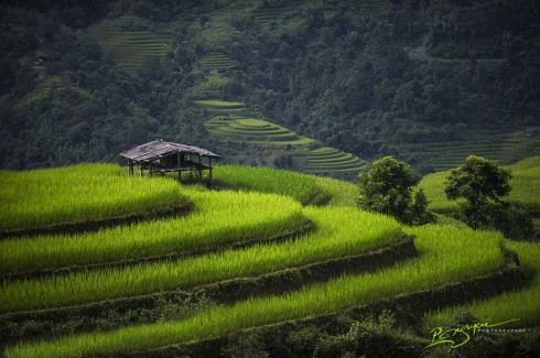 Rice Terraces in Legendary Ha Giang Province (Ruộng bậc thang ở tỉnh Hà Giang)