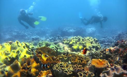 """Giải nhất của cuộc thi thuộc về tác phẩm """"Khám phá để bảo vệ rạn san hô"""" của tác giả Phạm Văn Thành."""
