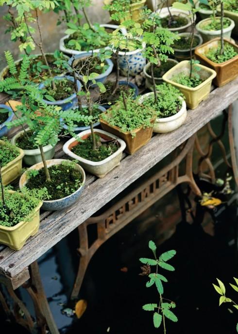 Vườn sỏi phong cách Nhật hài hòa với mặt tiền mang phong cách nhà Âu châu bình dị.