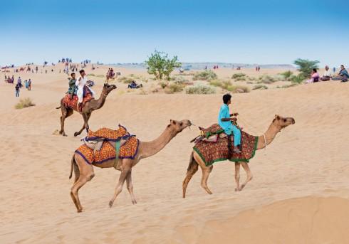 Những chú lạc đà tại điểm tập trung sẵn sàng cùng khách bắt đầu chuyến đi vào sa mạc Thar