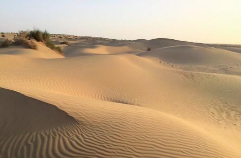 Sa mạc Thar mênh mông, chỉ có lạc đà và chủ nhân của chúng biết chúng tôi đang đi về phía nào