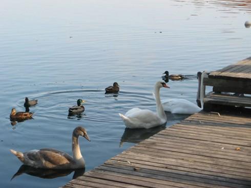 du lịch châu âu phần 1 - thiên nga ở Trakai - elle vietnam