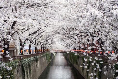 Hoa anh đào đã đẹp như thế_ellevietnam2