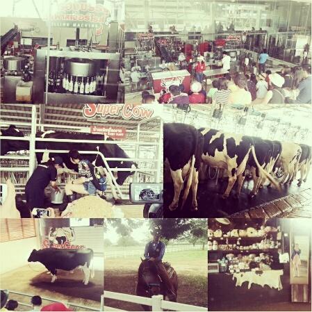 Chok Chai Farm là một tour khá hay ho mà tôi thật sự muốn bạn khám phá. Trong tour này bạn sẽ được tham gia khá nhiều hoạt động như: tham gia quy trình vắt sữa bò, tìm hiểu quy trình sản xuất các sản phẩm từ sữa, thưởng thức show diễn của các chàng cowboy, đăng ký thực hành làm kem từ chính trang trại này.