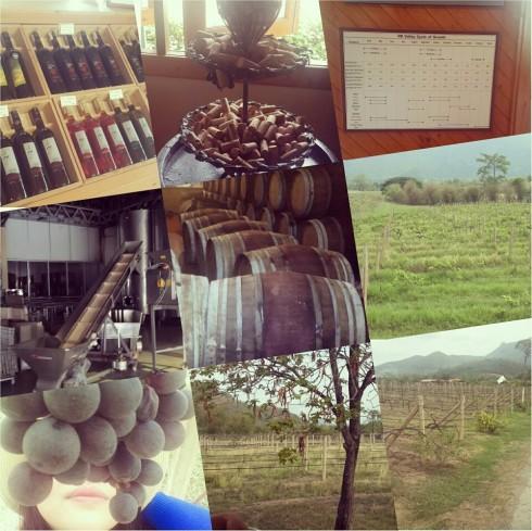 Đến PB Valley, chắc chắn bạn sẽ học được thêm rất nhiều kiến thức về rượu nho.