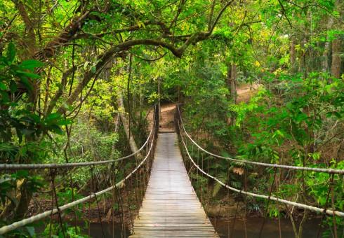 Cây cầu dây thú vị trong chuyến thám hiểm một khu rừng nhỏ trong khuôn viên Khao yai National Park