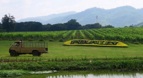 Bạn đã từng tham quan một vườn trồng nho và xưởng chế biến rượu vang? Hãy ghé PB Valley Khao Yai và mua một tour đi vòng quanh khu vực này. Hướng dẫn viên nơi đây rất niềm nở. Họ sẽ chia sẻ với bạn ý nghĩa và lịch sử của nơi này.