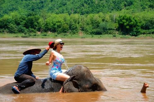 Cưỡi voi vượt dòng nước sông Mê Kông.