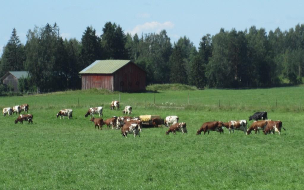 Du lịch châu Âu về miền nông thôn tuyệt đẹp 11