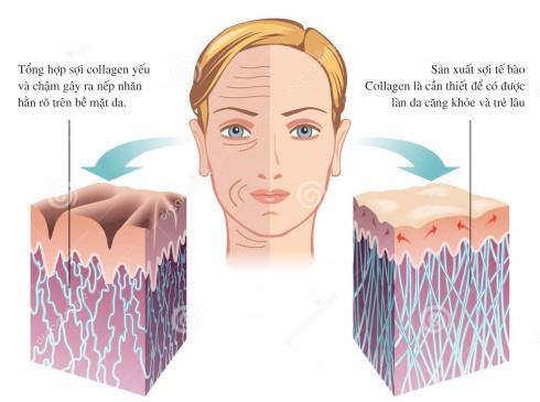 Tác dụng của collagen lên da
