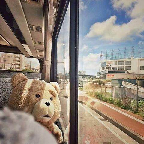 Chú gấu bông cưng giờ đây trở thành một người bạn thân thiết của chủ nhân.