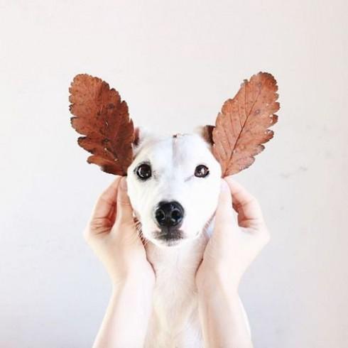 Trắc nghiệm tính cách từ vật nuôi yêu thích: chó