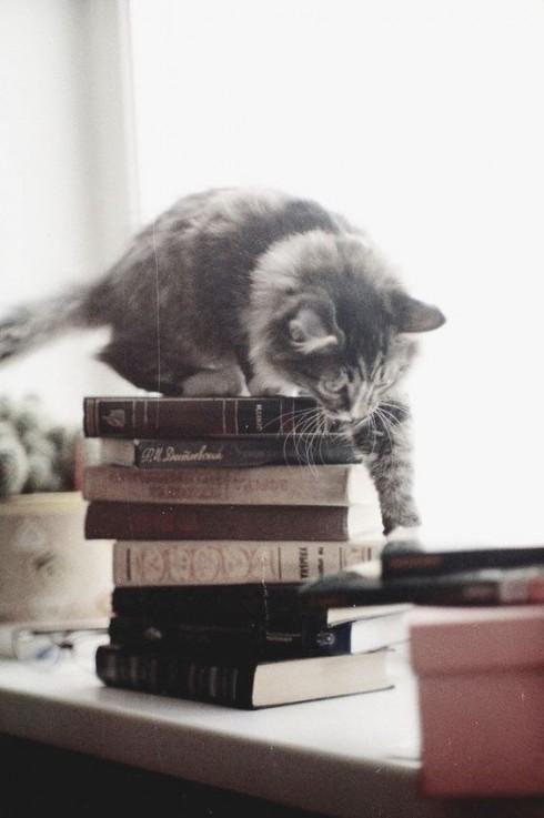 Trắc nghiệm tính cách từ vật nuôi yêu thích: mèo