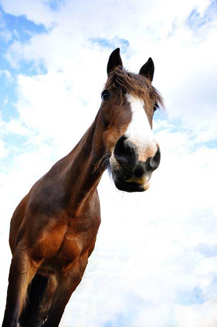 Trắc nghiệm tính cách từ vật nuôi yêu thích: ngựa