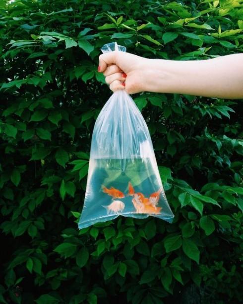 Trắc nghiệm tính cách từ vật nuôi yêu thích: cá