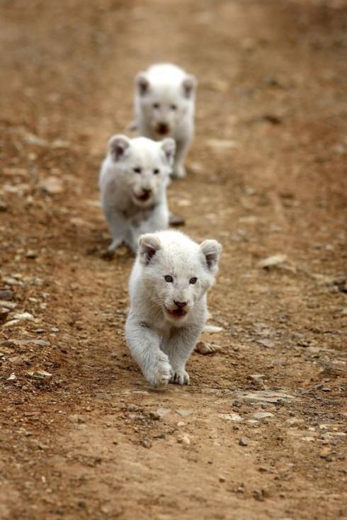 Trắc nghiệm tính cách từ vật nuôi yêu thích: sư tử