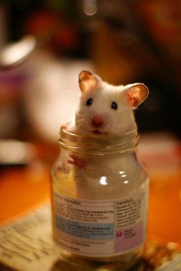 Trắc nghiệm tính cách từ vật nuôi yêu thích: chuột