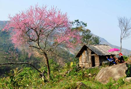 Du lịch Sapa - mùa xuân